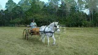 Sam Drives Razzy - Horse And 2-wheel Carriage
