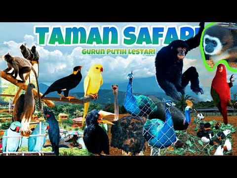"taman-safari-terbaru-di-indonesia-""the-latest-gurun-putih-lestari-safari-park""-2020-(part-2/2)-4k"