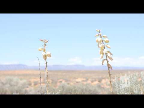 The Ecology Economy of Escalante Clip 5 (UT60)