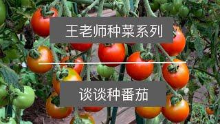 王老师种菜谈谈种番茄