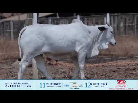 LOTE 143