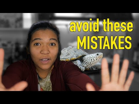 Common Turtle Care MISTAKES And How To Avoid Them! (before You Buy A Turtle Watch This)