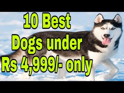 10 Best Dogs Under Rs 4,999/- only . - d.o.b