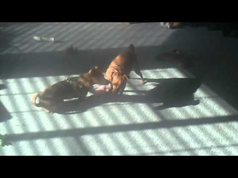 Baby dogs 20110209