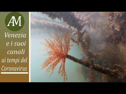 Venezia e i suoi canali al tempo del Coronavirus