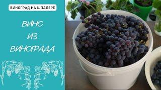 Вино из Винограда. Домашнее Виноделие как Хобби. Рецепт вина.