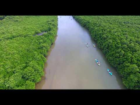 [4K] マングローブ群の中でカヌー  Drone Footage   okinawa islands Japan 沖縄 ドローン
