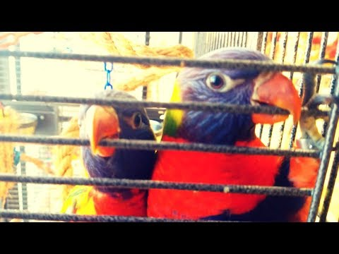 The Best Bird Store Ever - Parakeets, Conures, Macaws, Parrotlets, Lorkieets And More!