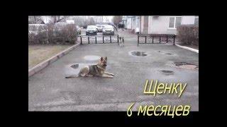 Что делать если на улице собака отвлекается на ВСЕ!