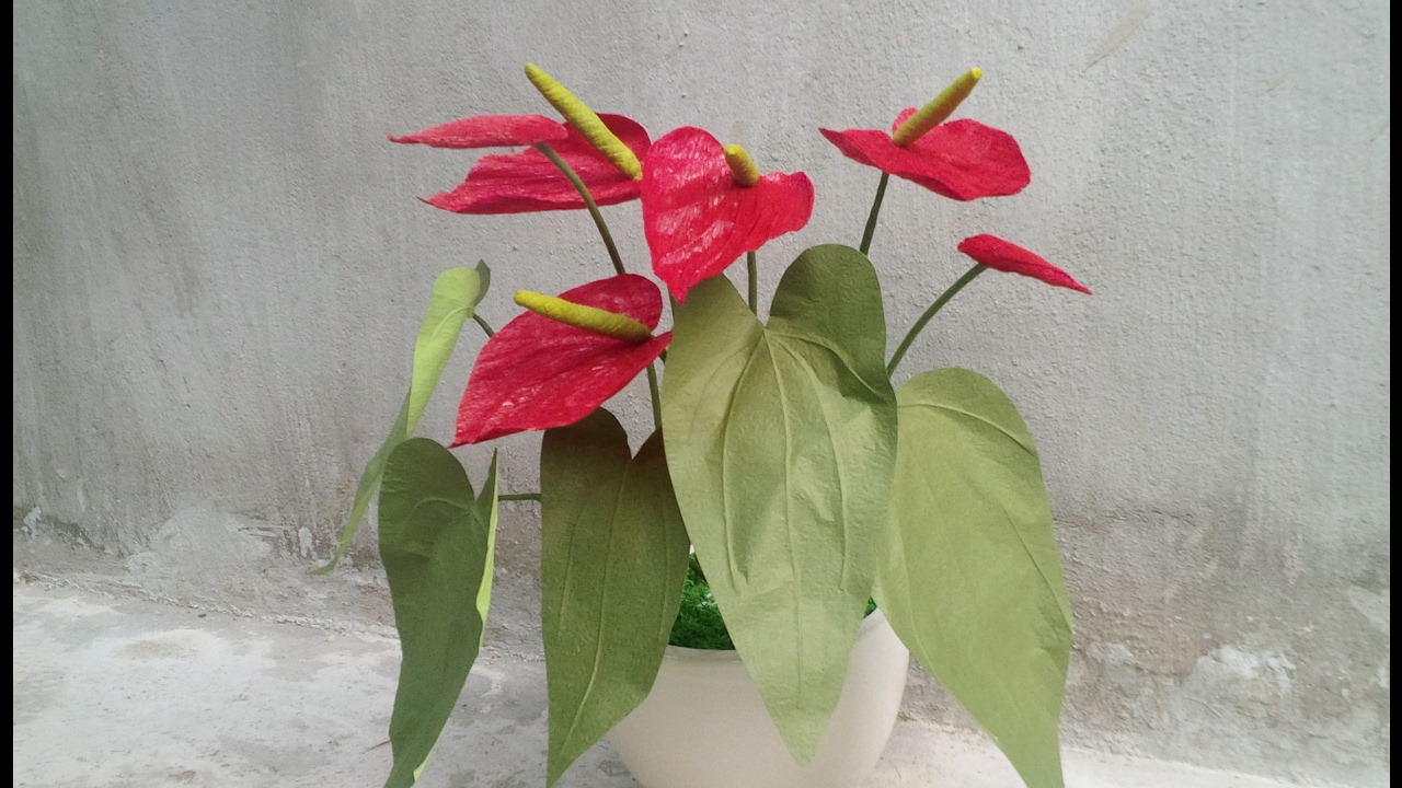 Abc Tv How To Make Anthurium Paper Flower From Crepe Paper Craft Tutorial