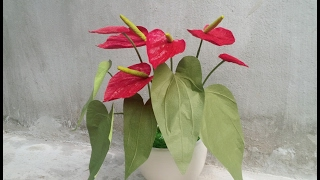 ABC TV | How To Make  Anthurium Paper Flower From Crepe Paper - Craft Tutorial
