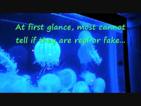 Artificial Glowing Jellyfish Desktop Aquarium Led Www Waterfallnow