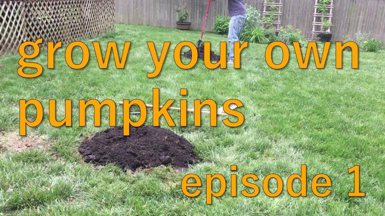 how to start your own backyard pumpkin patch summer 2017
