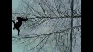 упал с дерева(, 2013-02-18T09:52:00.000Z)
