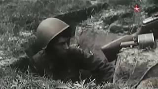 Джульбарс. Истории животных на войне