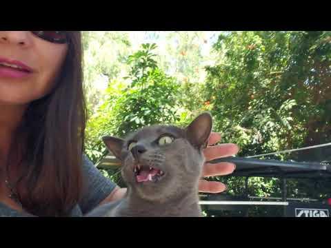 Cat hissing at me