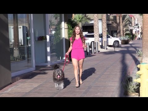Doggone Fabulous in Greater Palm Springs