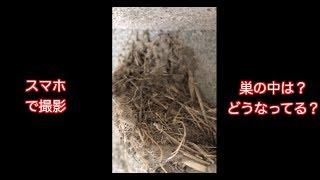 ツバメさんの巣の中や外観、ウンチの落ちる所(落下地点)。 現在どんな...