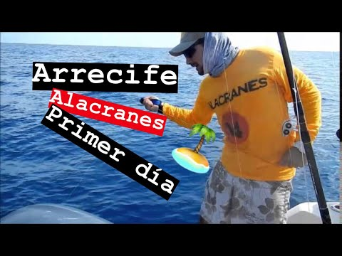 ARRECIFE ALACRANES PRIMER DIA