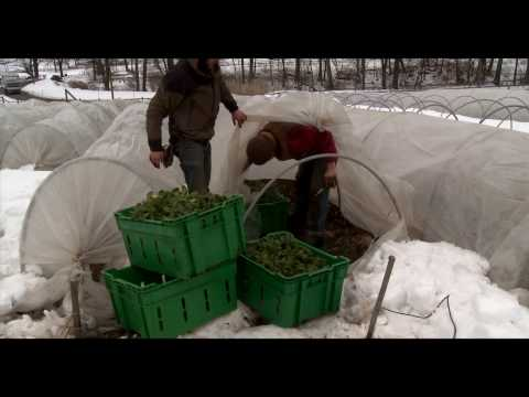 The Winter Harvest at Stone Barns