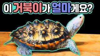 한국에서 가장 예쁜 거북이를 보여드립니다