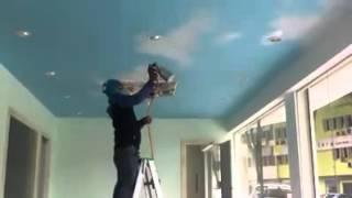 Cat ceiling