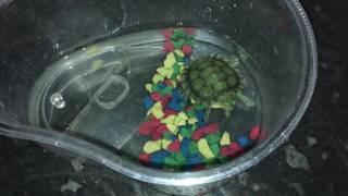 Водная черепаха ест с рук
