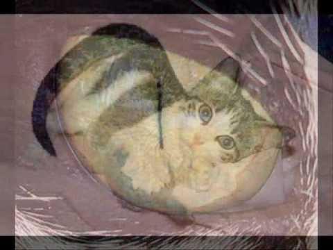 Kitty Kat Gib mir Milch 2009