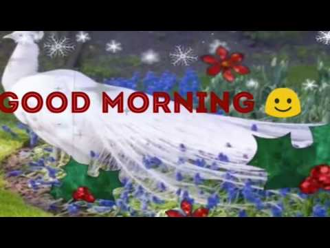 Good Morning Wishes , Greetings , Quotes , Messages | Good Morning Whatsapp Status Video|