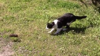 Video Bob the feral farm cat killing a rat download MP3, 3GP, MP4, WEBM, AVI, FLV Desember 2017