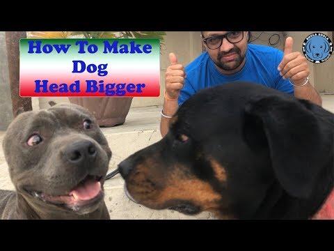 How To Make Dog Head Bigger
