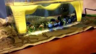 Все секреты о черепахах от Злотина Ильи(, 2015-01-13T19:09:51.000Z)