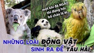 6 Loài Động Vật Sinh Ra Để Tấu Hài Cho Thiên Hạ