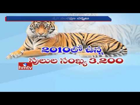 World's Wild Tiger Count Rising for the First Time in 100 years | HMTV Special Story