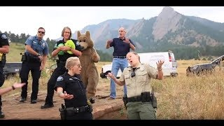 Boulder Police Department Lip Sync Challenge
