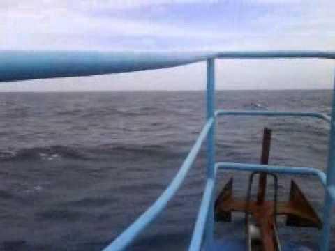 cagão em auto-mar