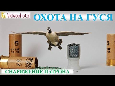 Весенняя охота на гуся в Алтае