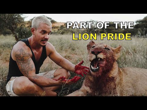 Part of the Lion Pride - Dean Schneider living with lions