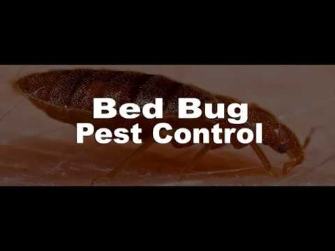 Bed Bug Exterminator Near Me 905 582 5502 Youtube