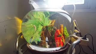 Biaya Bikin Aquarium Bulat Youtube