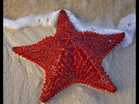 Starfish Are Radially Symmetrical Marine Creatures