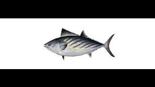 Русская рыбалка 3.99 Гренландия. Ловля бонито на бж