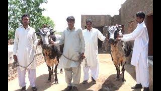 Akhara krah in pakistan.Danda da shoke Baisa 1