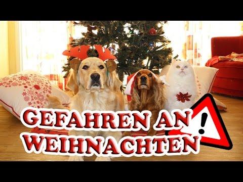 gefahren an weihnachten f r haustiere hund katze sittiche vor gef hrlichen situationen. Black Bedroom Furniture Sets. Home Design Ideas