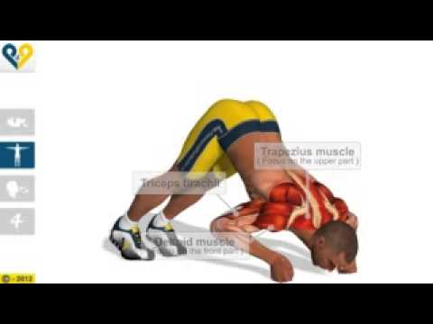 V Push Ups with clenched fists   Fitness Exercises, Trapezius, Triceps, Deltoid Muscle