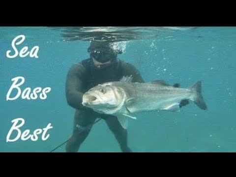 BEST SEA BASS SPEARFISHING   ALL BEST SHOTS COMPILATION IN FREE DIVING 30 Min
