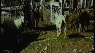 Documentario autoprodotto (1995/1996) in lingua Friulana, sulla loc...