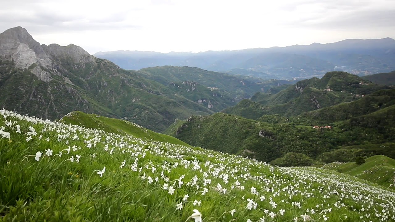 Soothing Spring Sounds For Relaxation Flower In Mountain