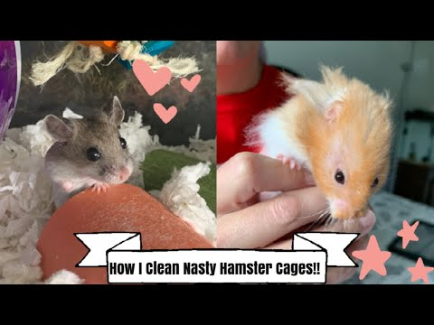 How I Spot Clean The Hamster Cages!!