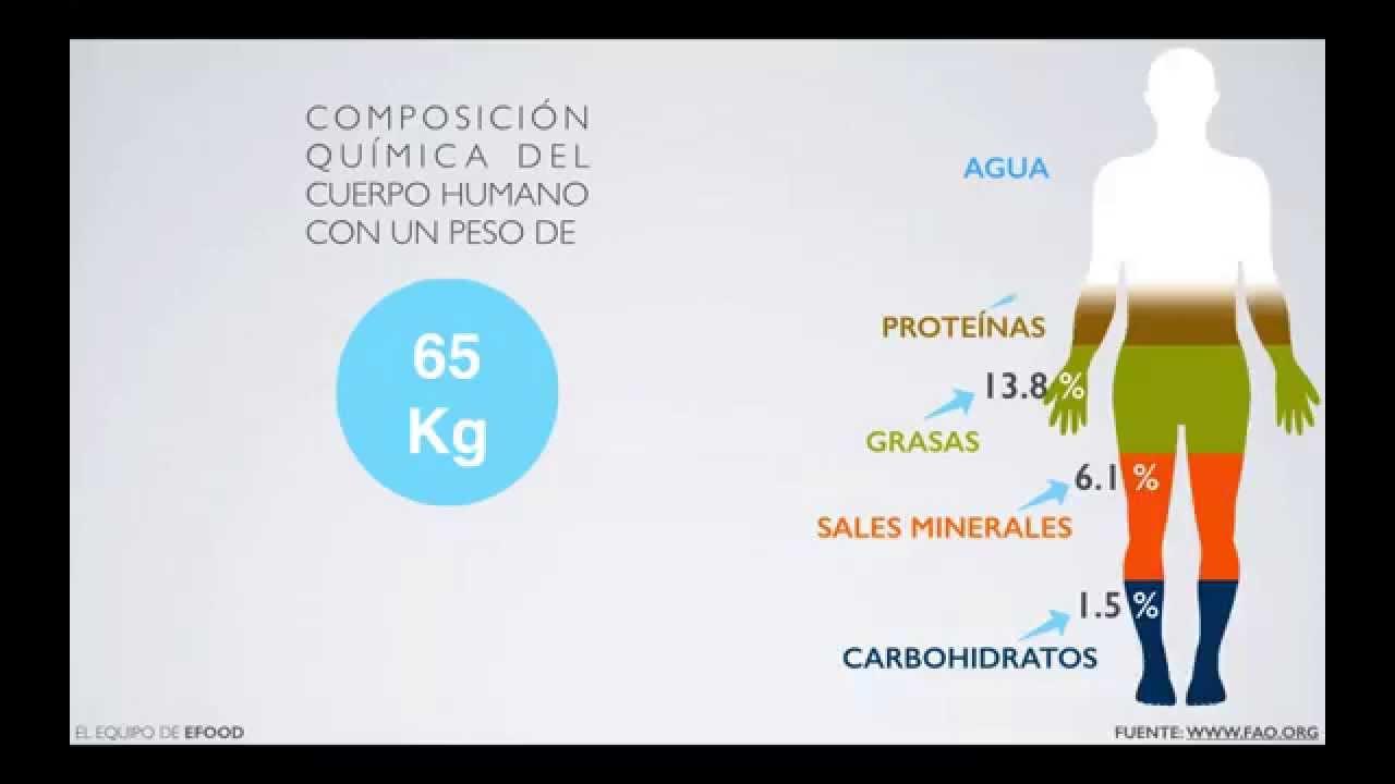 Elementos Químicos en el Cuerpo Humano (Vídeográfica) - YouTube